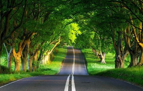 Great Example Of Perspective Photography Green Nature