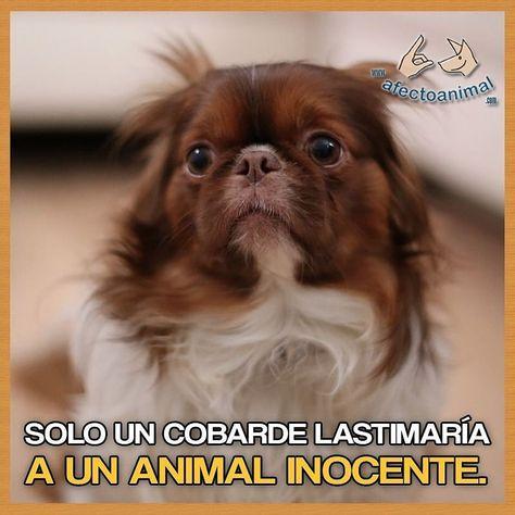 friends Solo un #cobarde lastimaría a...