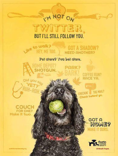 Cute Poster Idea Animal Shelter Dog Adoption Austin Humane Society