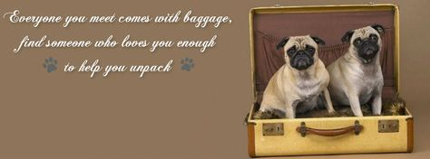 Pug Facebook Cover Photos For Your Timeline. Quotes