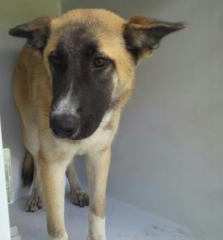 Www Petharbor Com Animal Search All Animal Shelter Animals Humane Society