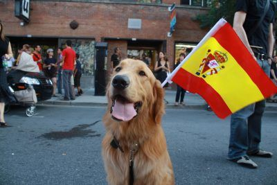 Spanish Dog Names 200 Awesome Spanish Names Dog Names Best