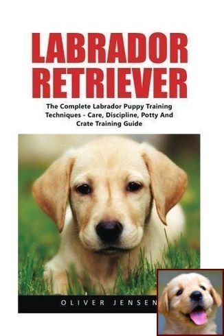 House Training A Puppy For Dummies And Dog Training Classes Petco Reviews Puppy Training Labrador Puppy Training Labrador Retriever