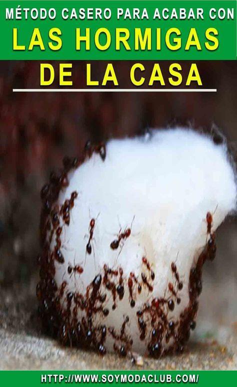 Elimina Las Moscas Los Mosquitos Y Las Cucarachas Por Siempre Con Este Truco Casero Alaskacroche Eliminar Hormigas Cocina Repelente De Hormigas Las Hormigas