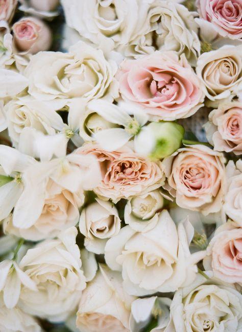 Blush roses.