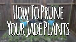 Plant Hoarding Adventures Youtube Youtube Jade Plants Plants Bonsai