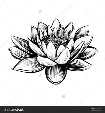 51 Ideas Tattoo Lotus Flower Black Water Lilies For 2019 51 Ideas Tattoo Lotus Flower Black Water Lily Flower Tattoos Water Lily Tattoos Lotus Flower Drawing