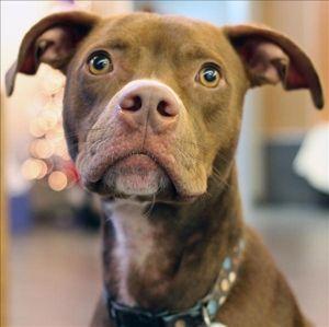 Holligolightly Spca Of Texas Dogs For Adoption Dog Adoption Homeless Pets I Love Dogs