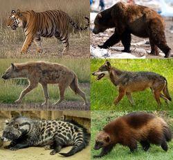 نتيجة بحث الصور عن صور عن حيوانات آكلات اللحوم والأعشاب African Civet Hyena Animals