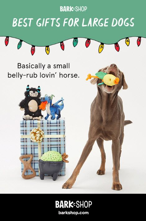 The Perfect Gift For Your Big Good Boy Awaits Diy Dog Gifts
