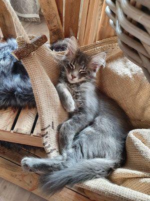 Zufriedene Schnurrer Naturholzbaume Fur Katzen Cozycat Fur