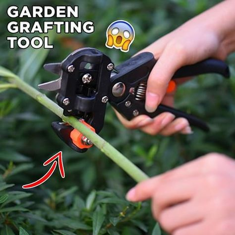 Create exact genetic copies of your best fruit trees with this grafting tool & effectively double or triple your harvest! 😍🌳 Grafted fruit trees also bloom & produce sooner than those that are propagated by seeds!. 🍎