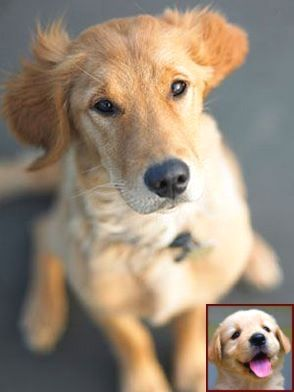 Dog Behavior Urinating Problems And Dog Training Courses In India