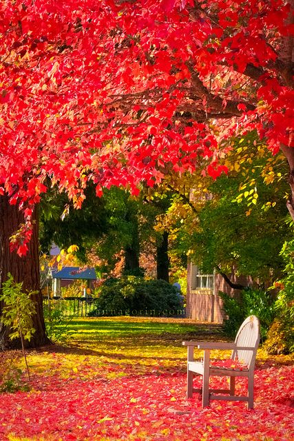 I never experienced the Fall Colors until I lived at Willamette. LOVED it! Autumn by the mill stream at Willamette University by Anna Gorin, via Flickr