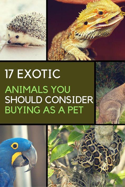 17 Exotische Tiere Die Sie Legal Als Haustiere Besitzen Konnen In 2020 Exotische Haustiere Exotische Tiere Einzigartige Tiere
