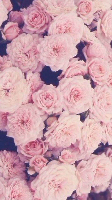 Rose Gold Iphone Wallpaper Wallpapersafari Hubsche Tapeten Blumentapete Iphone Hintegrunde