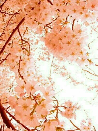Peach Cherry Blossoms Https Soranews24 Com 2016 04 13 Beyond Sakura How To Tell A Cherry Blossom From A Plum Peach Aesthetic Pastel Aesthetic Peach Flowers