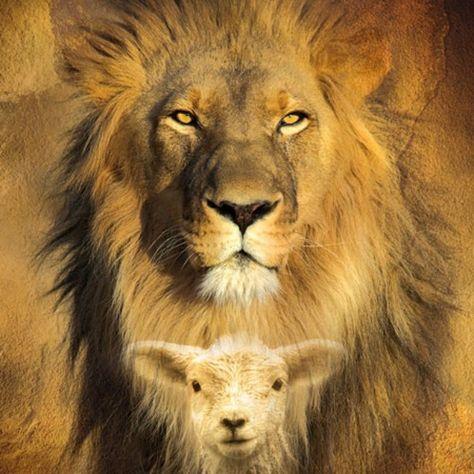 53 ideas de Cordero y leon | leon de juda, tribu de judá, león y cordero