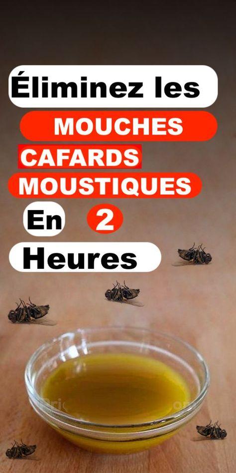 Éliminez les mouches, les cafards et les moustiques de votre maison en seulement 2 heures.