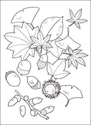 レク素材を探す 介護レク広場 レク素材やレクネタ 企画書 の無料ダウンロード 2020 塗り絵 無料 花 花の塗り絵 塗り絵 秋