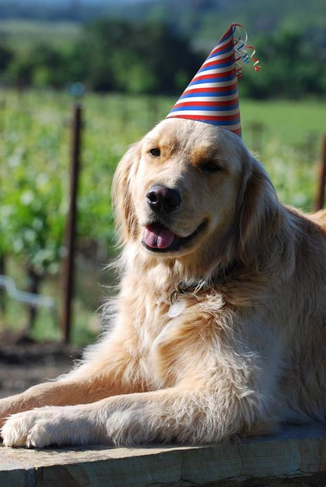 Today We Re Celebrating Cody S 4th Birthday Best Dogs For