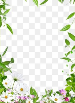 Flower Border In 2020 Free Watercolor Flowers Flower Border Png