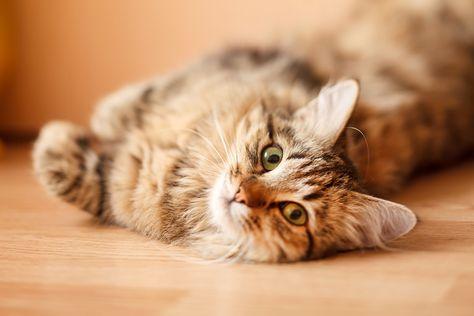 Un conseil sans peur de nos amis du Maddie's Fund! - #conseil #maddie -     Peut-on caresser un chat stressé et le garder en bonne santé? Oui, dit une étude récente sur les chats de refuge, rapportée par le blog sur la médecine de refuge du Maddie's Fund. Dans une étude publiée dans le numéro de juin 2014 de la revue Preventive Veterinary Medicine , les chercheurs ont découvert que les chats non caressés au cours de leurs 10 premiers jours dans un refuge étaient 2,4 fois plus susceptibles de dé