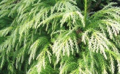 024c256351cd83c368efbd2d8c005659 backyard landscape design red cedar