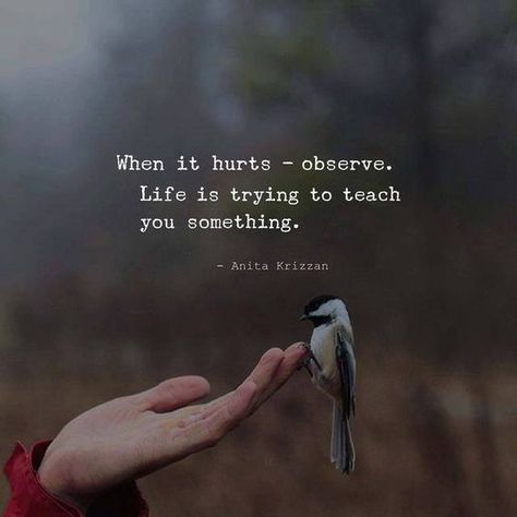 When it hurts - observe. —via http://ift.tt/2eY7hg4