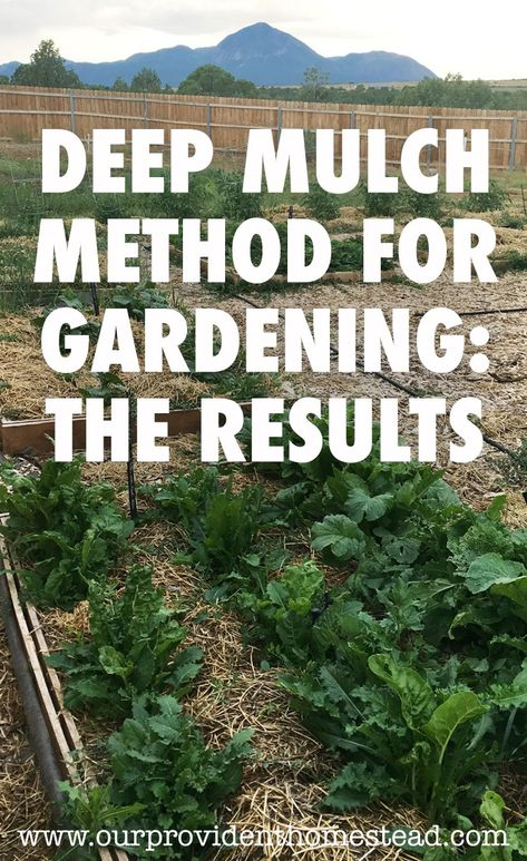 Deep Mulch Gardening , Deep Mulch Method For Gardening The Results