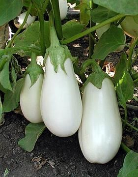 Check Out The Deal On Eggplant White Moon 250 Seeds At Hazzard S Seeds Organic Seeds Heirloom Vegetables Eggplant Seeds