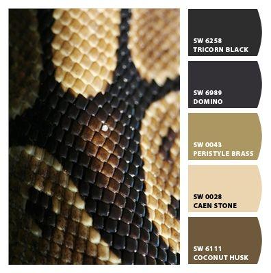 Closeup of ball python scales.
