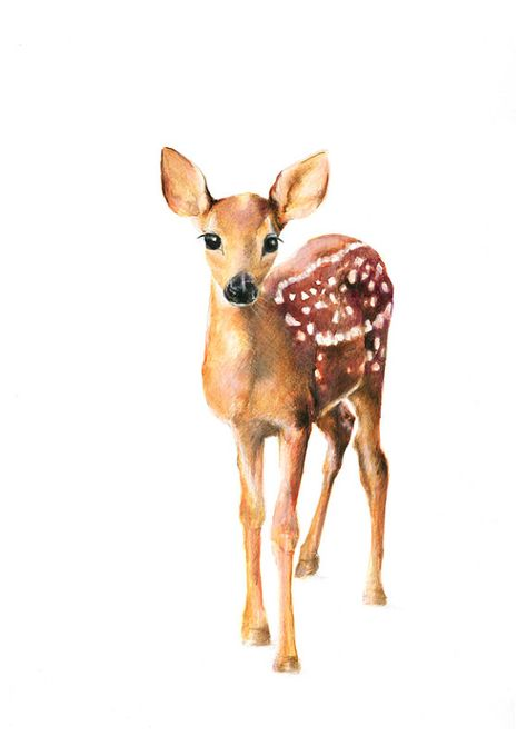 art  illustration  art prints  drawing   deer  by NayanaIliffe