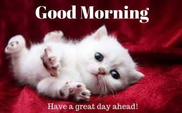 Cute Kitten Saying Good Morning Good Morning Animals Good Morning Cat Good Morning