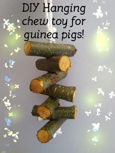 Pin On Guinea Pig Toys And Natural Homemade Accessories