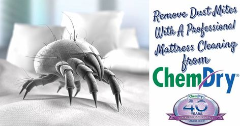 Dust Mites Excellent Reason To Have Your Mattress Your Upholstery And Your Carpets Professionally Cleaning Upholstery Mattress Cleaning How To Clean Carpet