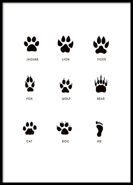 Decorate the kids' room with the cutest children's poster ever! Black and white children's poster with different animal paw prints and a human footprint. A super cute poster, perfect for a curious toddler. It looks great in either a black or white picture frame. www.desenio.com