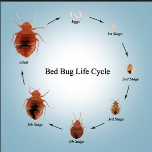 Awesome 15 Best Bed Bugs Treatment   3 Images On Pinterest | Pest Control, Bed Bugs  Treatment And Bedding