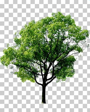Tree Png Clipart Tree Free Png Download Forest Plants Tree Forest Tree