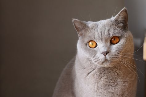 fotos de lombrices de gatos