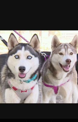 Smile dog x female dog reader - Please read it's URGENT