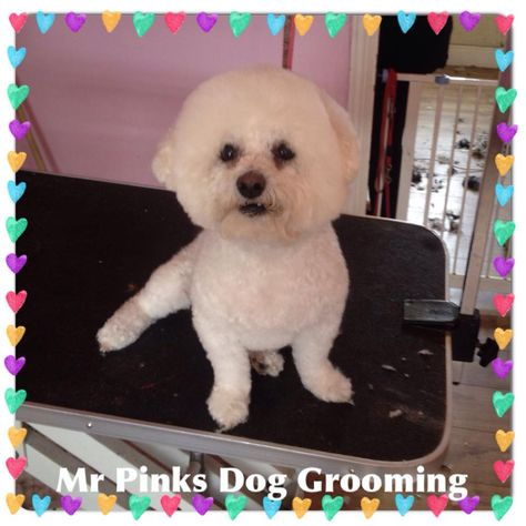 Pin By Mr Pinks Pampered Pets On Mr Pinks Grooming Salon