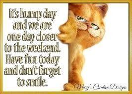 Happy Thursday Funny Mornings Happy Thursday Funny Wednesday Quotes Wednesday Humor Good Morning Happy Thursday