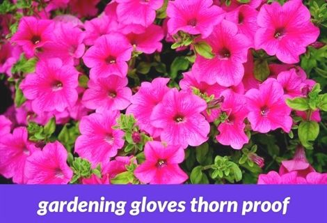 Gardening Gloves Thorn Proof 308 20180915175842 53 Wentworth Garden Centre Jobs Yvonne Gilbert An Organic Horticulture Garden Soil Garden Soil Preparation