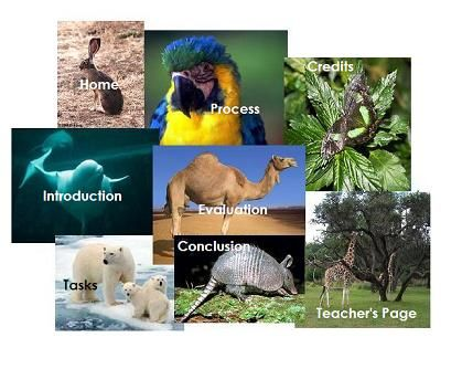 A fourth grade endangered species webquestry well done a fourth grade endangered species webquestry well done science habitats pinterest endangered species teaching science and teacher stuff sciox Images