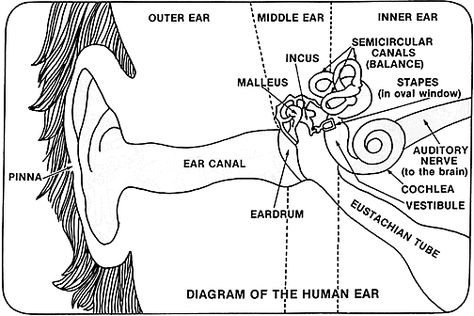 the ear Speech and Language Pinterest Unit studies - sample psychrometric chart