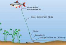 Mit Köderfisch auf Winter Zander | Fische angeln, Angeln