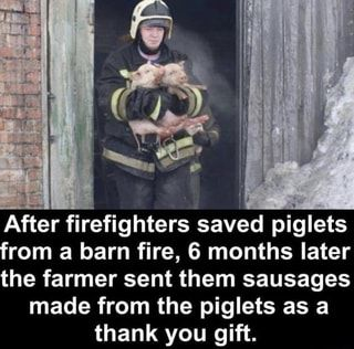 After Firefighters Saved Piglets From A Barn Fire 6 Months Later The Farmer Sent Them Sausages Made From The Piglets As A Thank You Gift Ifunny Memes Firefighter Quotes Funny Wife Humor