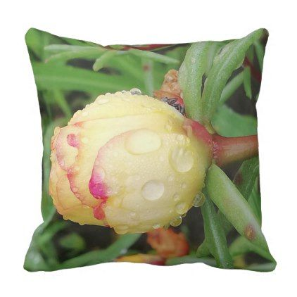 Yellow Portulaca Flower With Raindrops Throw Pillow Zazzle Com Portulaca Flowers Flowers Flower Close Up