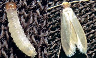 Lebensmittelmotten Bekampfen In 2020 Motte Pflegeleichte Pflanzen Lebensmittelmotten